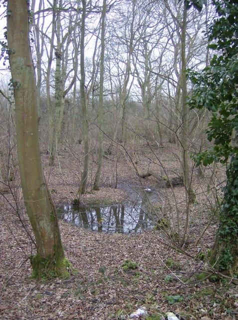 Woods near Sanham Green