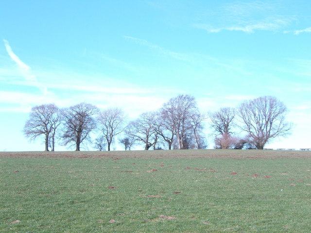 Oaks on the horizon