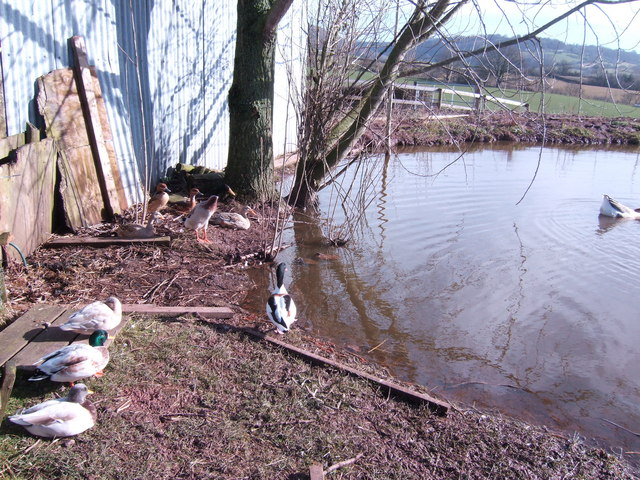 Duck pond at Old Llanishen Farm