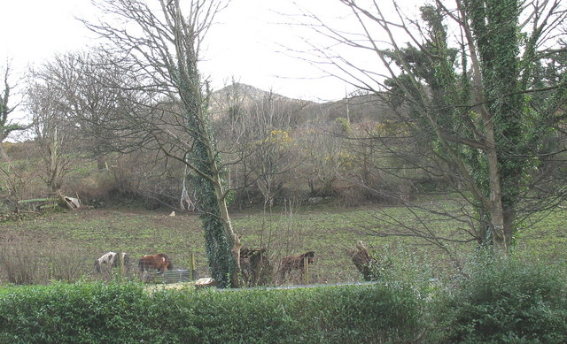 Ponies on the slope opposite the up bus stop at Gyrn Goch