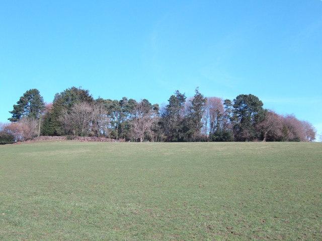Wyndcliffe woodland