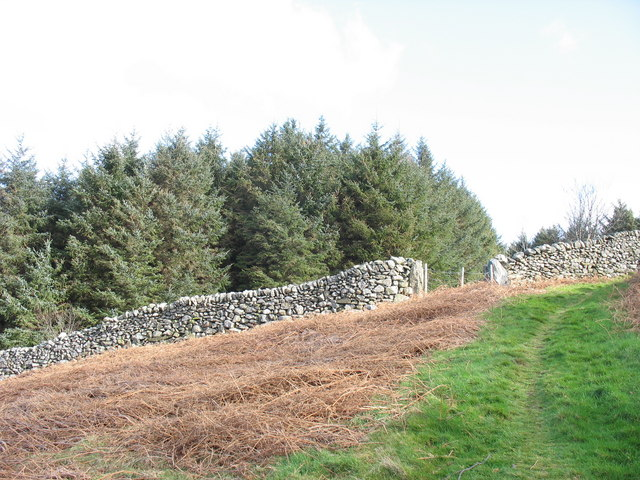 The boundary wall of the Cwm-gwared plantation