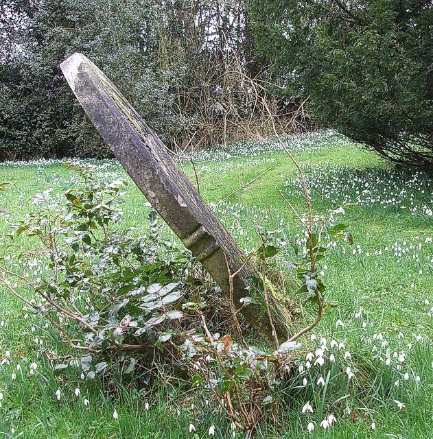 Diagonal gravestone & snowdrops