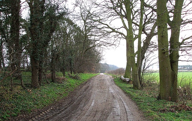 Byway near Steppingley Copse