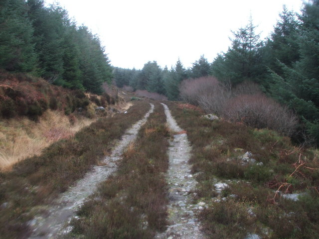 Unmarked Forestry Track on Kintyre.