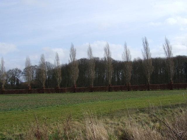 Edge of Woodland, Wattlefield