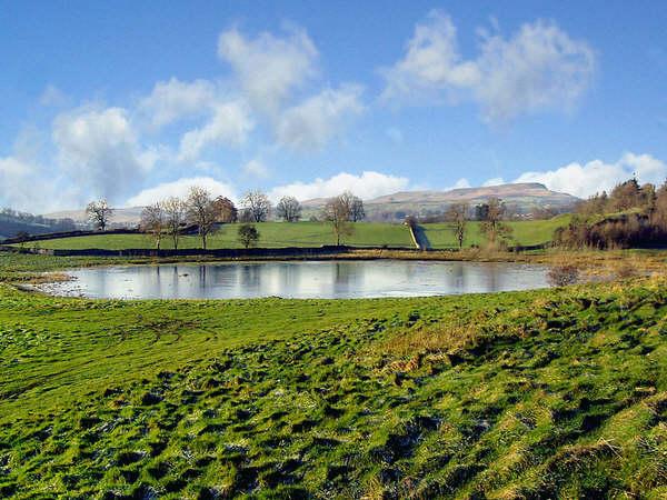Pinker's Pond