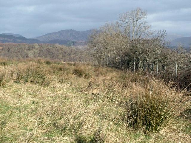 Rough Pasture and Deer Fence, Benderloch