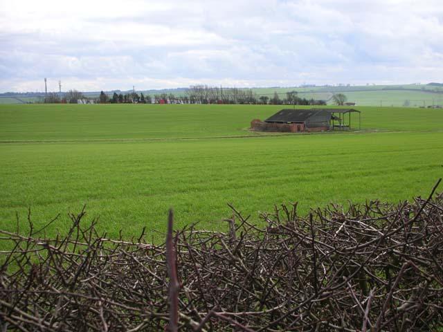 Cornfield with barn
