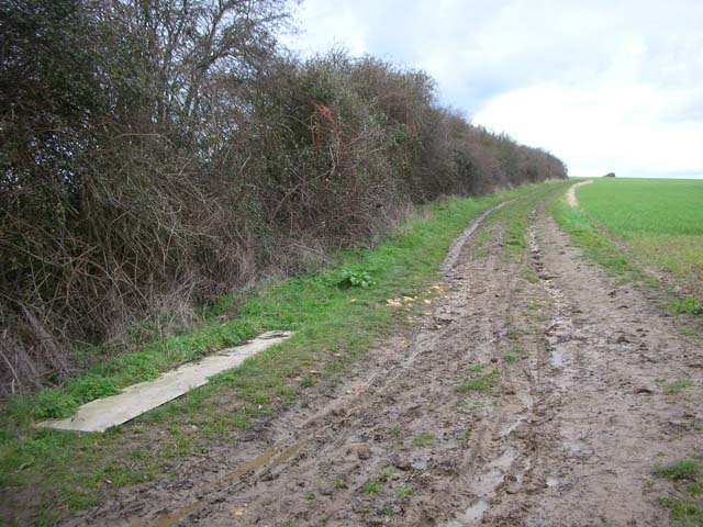 Hedge and Farm Track