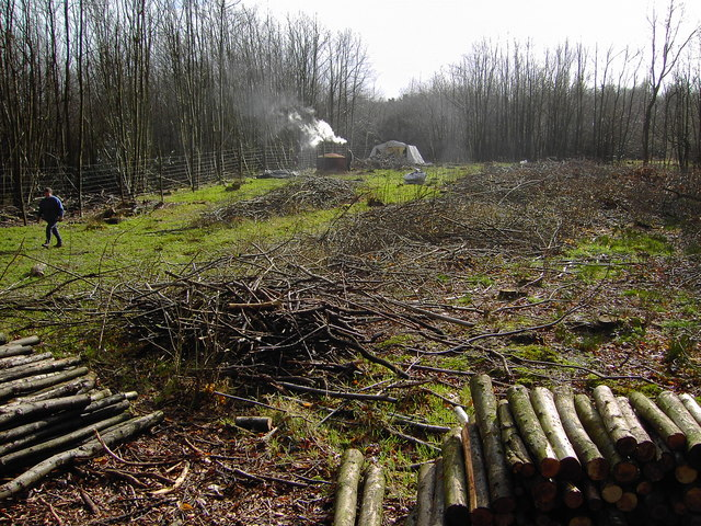 Charcoal burning, Charcoal Burners Road, Savernake (1)