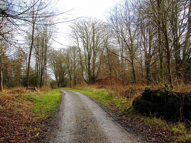 Charcoal Burners Road, Savernake looking east