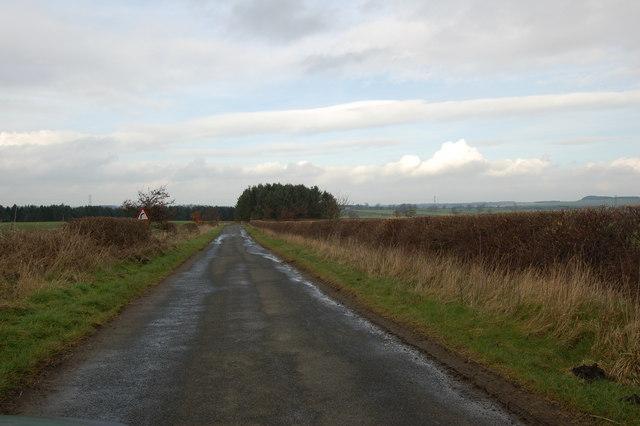Woodland off B6309 near Nafferton