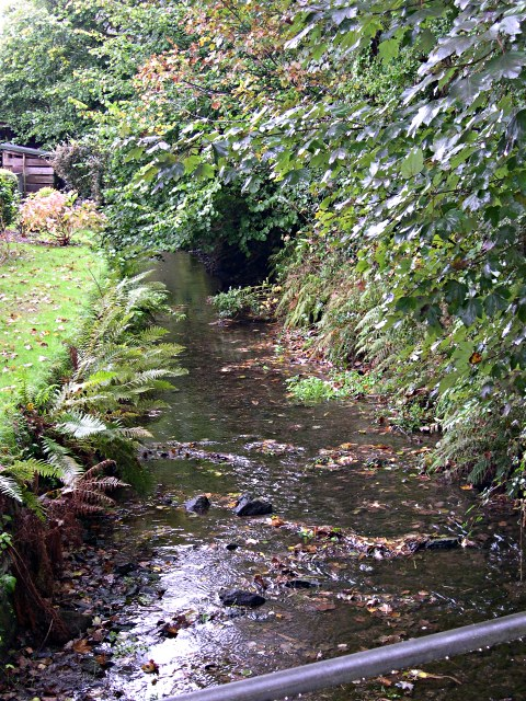 The stream at Carnbargus