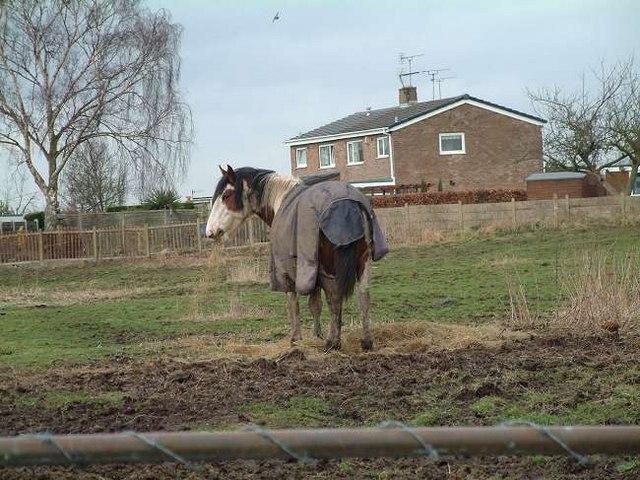 Horse at Hanford