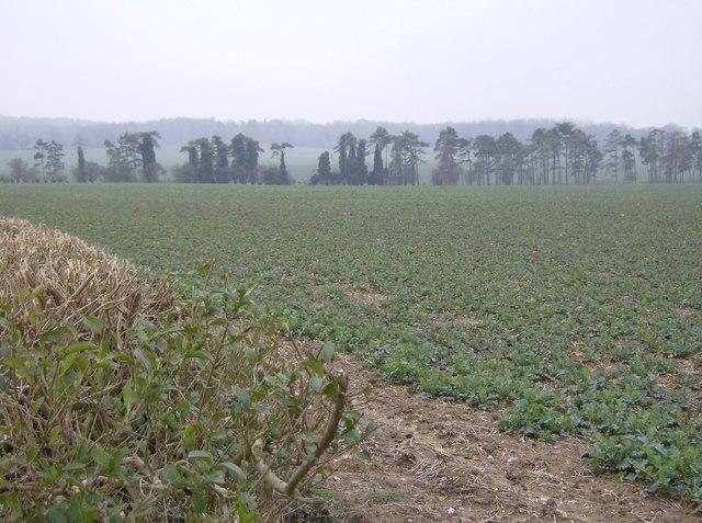 Farmland near Cold Harbour