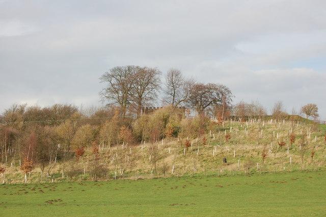 Whittington Hill