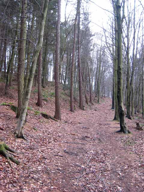Footpath through Rag Path Wood, near Esh Winning