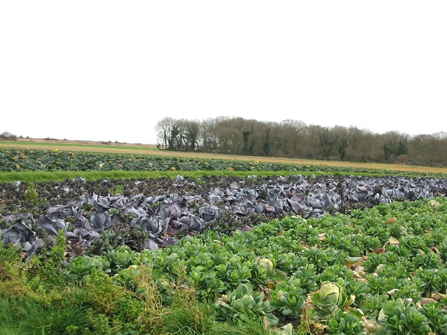 Field of various cabbages and the mis-named Great Wood