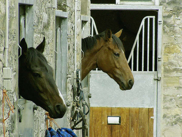 Middleham racing stable