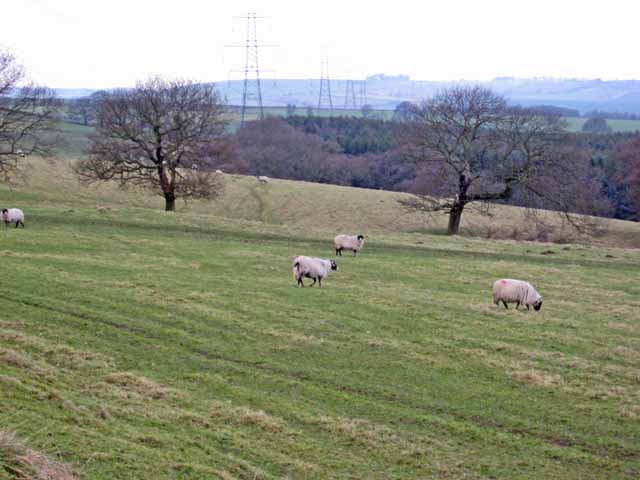 Pasture land above Esh Wood