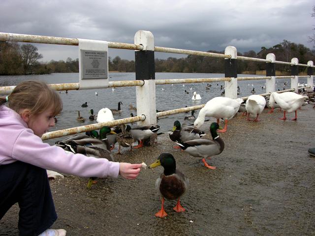 Redesmere Lake, Siddington