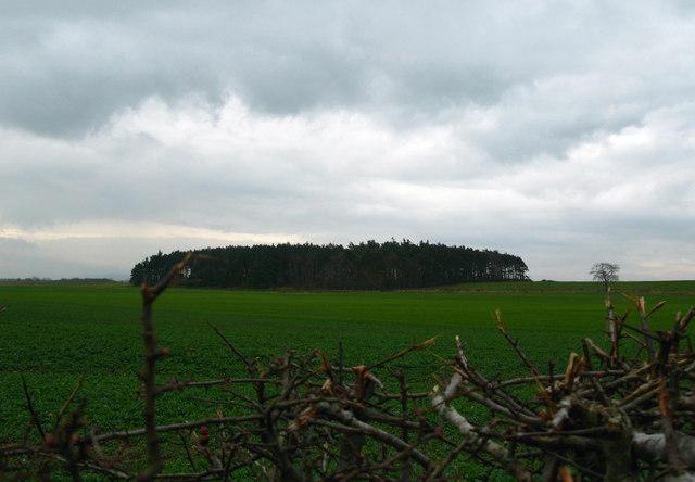 Plantation, Felkington