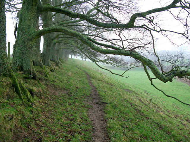 Row of Trees, South of Ancroft