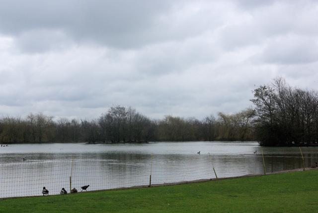 Lake by Laceys Lane