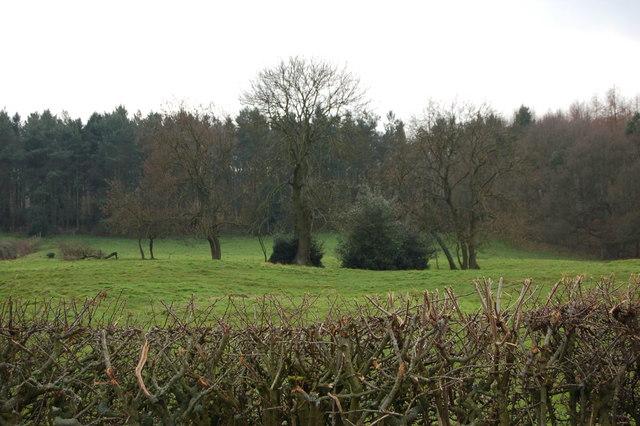 Trees and bushes near Black Byerside wood