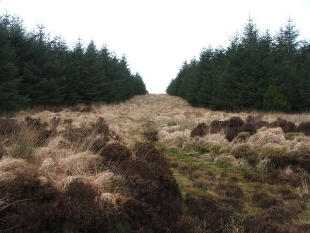 Firebreak in Kintyre Forestry.