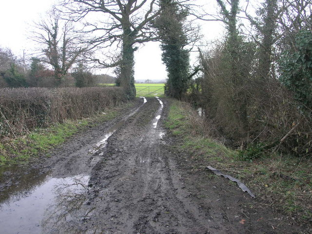 Mud and Trees