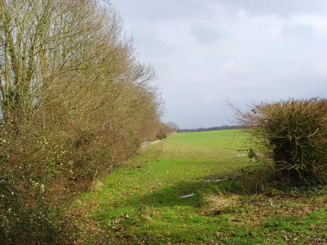 Field alongside the railwayline