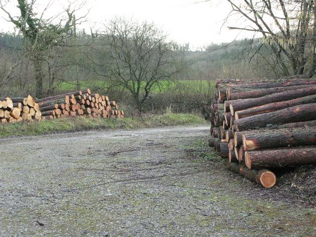 Harridge Wood Nature Reserve