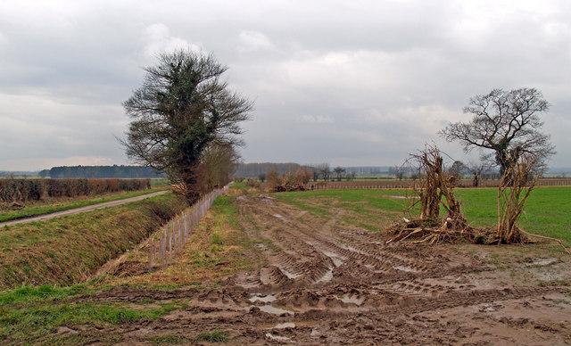 Hedge Planting on Washdyke Lane