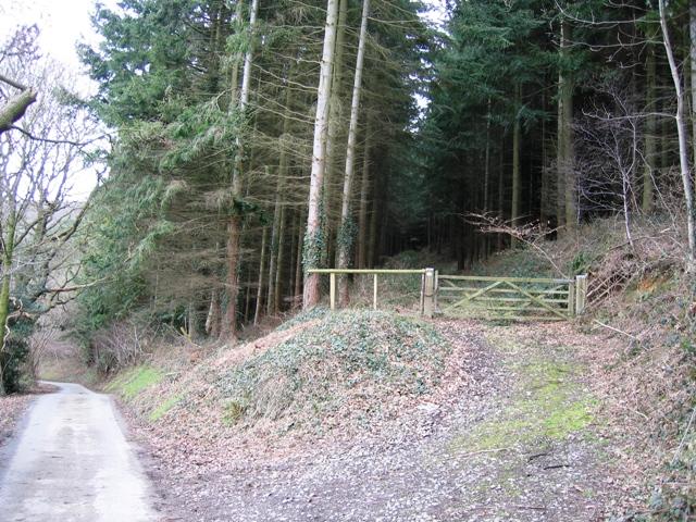 Forestry near Sodom Covert