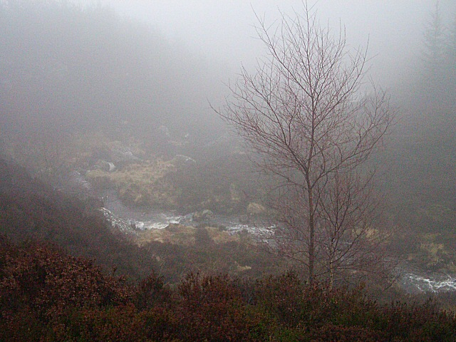 Forest valley in mist