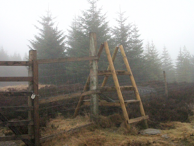 Forest boundary with gate and stile