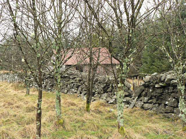 Deciduous trees and hut