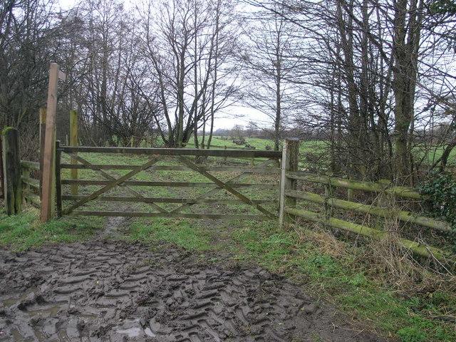 Path and Mud Tracks