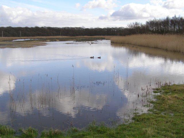 Keeping Marsh, Beaulieu Estate