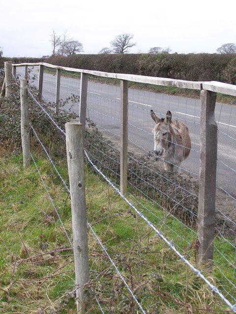Donkey on Hatchet Lane, Harlicks Hill, Beaulieu Estate