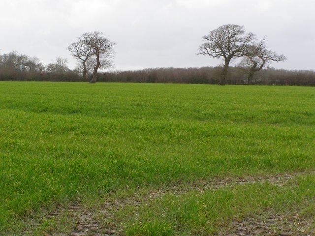 Field west of Lodge Farm