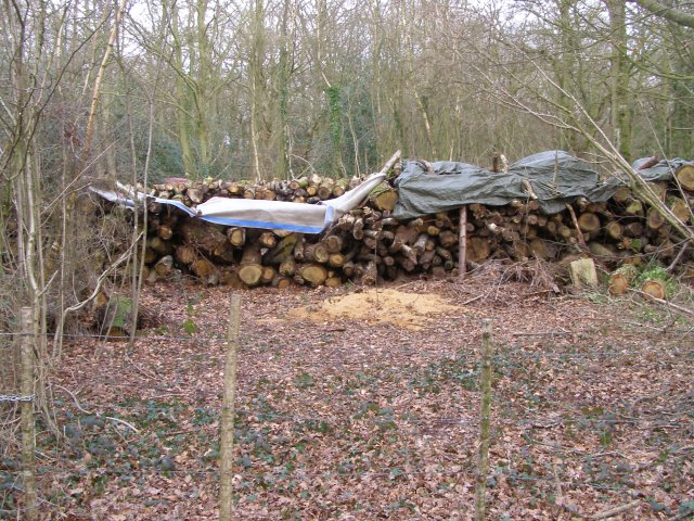 Cut wood in Longmead Copse, Beaulieu Estate