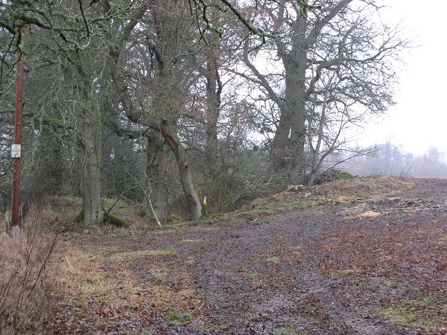 Quarry or marl pit, Cromwellpark