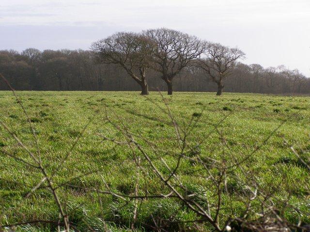 Field south of Bergerie Farm
