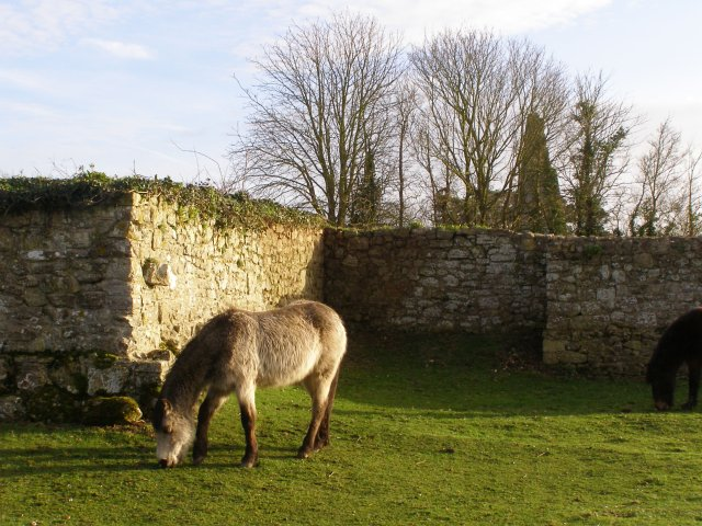 Pony grazing at St Leonards Grange, Beaulieu Estate