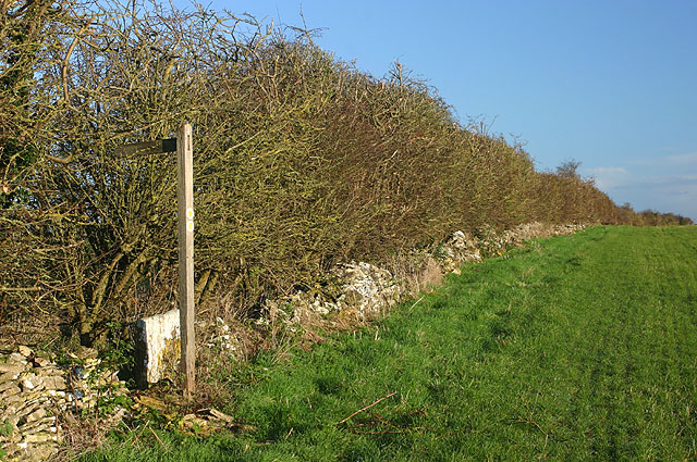 Footpath and hedge, Stonelands