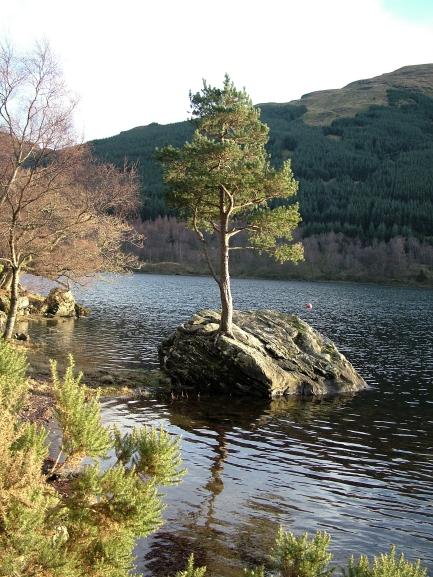 Lone Pine, Loch Voil