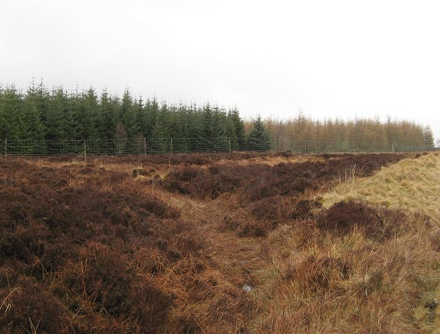 Plantation beside the Pitlochry-Kirkmichael road